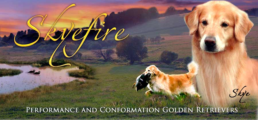 Skyefire Golden Retrievers